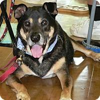 Adopt A Pet :: BARNEY - Fort Lauderdale, FL