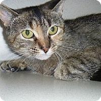 Adopt A Pet :: Hardy - Hamburg, NY