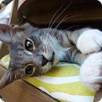 Adopt A Pet :: Oliver T - Orlando, FL