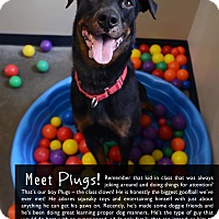 Adopt A Pet :: Plugs - Wilmington, DE