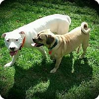 Adopt A Pet :: Einstein - Sharon Center, OH