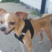 Adopt A Pet :: Peanut - Bronx, NY