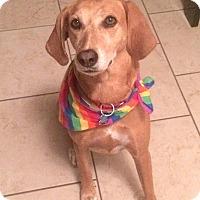 Adopt A Pet :: Liffey - Houston, TX