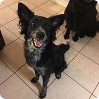Adopt A Pet :: Jade #306 - Allen, TX