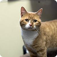 Adopt A Pet :: Simon - Fremont, NE