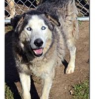 Adopt A Pet :: Diesel - Elyria, OH