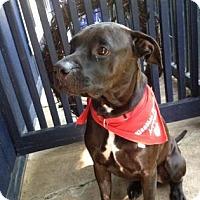 Adopt A Pet :: Everest - Northfield, MN