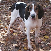 Hound (Unknown Type) Mix Dog for adoption in Voorhees, New Jersey - Boss