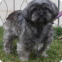 Adopt A Pet :: Curly - Palo Alto, CA