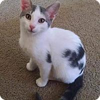 Adopt A Pet :: Blake - New Milford, CT
