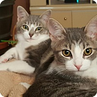 Adopt A Pet :: Lenny and Lelia  (loving pair) - Sterling Hgts, MI