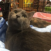 Adopt A Pet :: Jackson & Jaycie - Horsham, PA