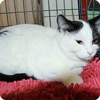 Adopt A Pet :: Fernando - Rochester, MN