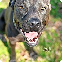 Adopt A Pet :: Hershey - Colleyville, TX