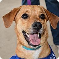 Adopt A Pet :: Luke - Piqua, OH