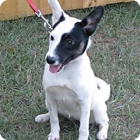 Adopt A Pet :: Spice - Orange Park, FL