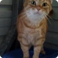 Adopt A Pet :: Cara - Delmont, PA