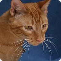 Adopt A Pet :: Kitterkatz - Tomball, TX