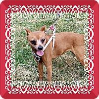 Adopt A Pet :: Min - Tinton Falls, NJ