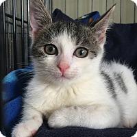 Adopt A Pet :: Annie - Island Park, NY