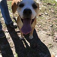 Adopt A Pet :: Lucky - Daleville, AL