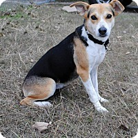 Adopt A Pet :: Faith - Weatherford, TX