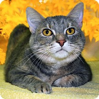 Adopt A Pet :: KiKi - New Castle, PA