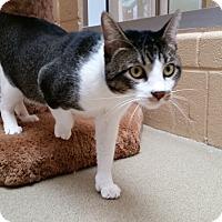 Adopt A Pet :: Ziggy - Chula Vista, CA