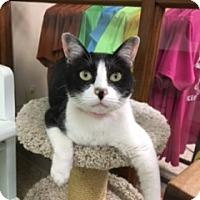 Adopt A Pet :: Gabby - Medina, OH