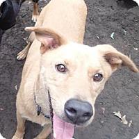 Adopt A Pet :: Humphrey - Ravenel, SC
