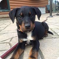 Adopt A Pet :: Dana - Sinking Spring, PA