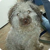 Adopt A Pet :: Bolt - Warwick, RI