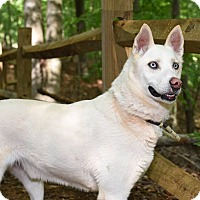 Adopt A Pet :: Austin - Bardonia, NY