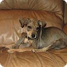 Adopt A Pet :: Buttercup