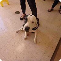 Adopt A Pet :: NELLY - Naples, FL