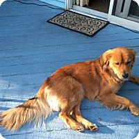 Adopt A Pet :: Cooper (formerly Blake - Doylestown, PA