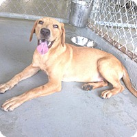 Adopt A Pet :: Sunrise - Livingston Parish, LA