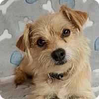 Adopt A Pet :: HIggins - Yucaipa, CA