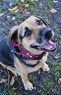 Rottweiler/Shepherd (Unknown Type) Mix Dog for adoption in Loxahatchee, Florida - Nana