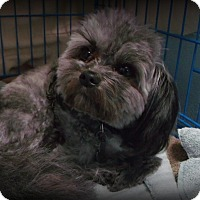 Adopt A Pet :: Teddy - Muskegon, MI