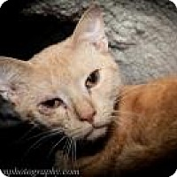 Adopt A Pet :: Aaron - Wellesley, MA