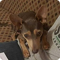 Adopt A Pet :: Helen Gillis - Boston, MA