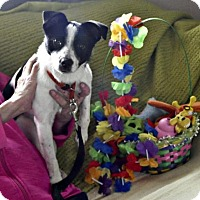 Adopt A Pet :: Suzi Q - Yreka, CA