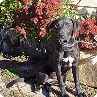 Adopt A Pet :: Zita - West Chicago, IL
