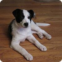 Adopt A Pet :: River - Cleveland, OH