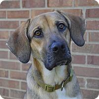 Adopt A Pet :: Dill - Germantown, TN