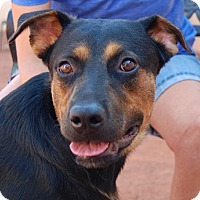 Adopt A Pet :: Annalise - Las Vegas, NV