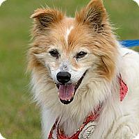 Adopt A Pet :: Sparky - Dacula, GA