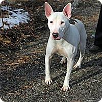 Adopt A Pet :: Spud - Tinton Falls, NJ