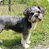 Adopt A Pet :: Coby - Hazard, KY